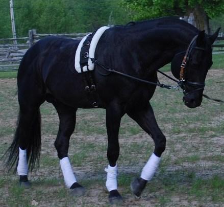 Black horses jumping - photo#15