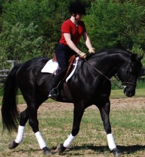 All Around Black Quarter Horse The Equinest Free
