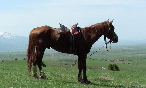 Adaev Horse