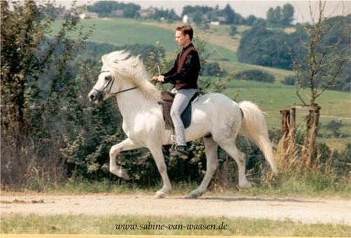 Aegidienberger Horse