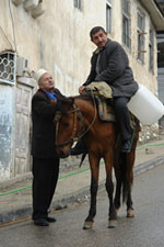 Albanian Horse