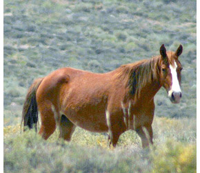 .>> the land of ëlyxon <<. a wild horse rp American-mustang-horse