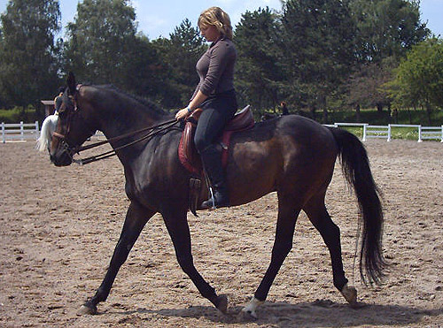Anglo-Kabarda Horse