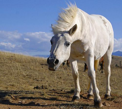 Horse in Australia