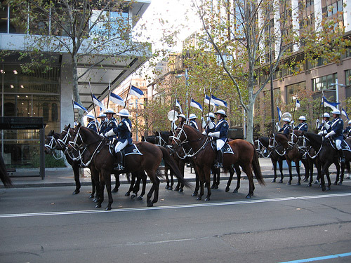 Horses on parade in Australia