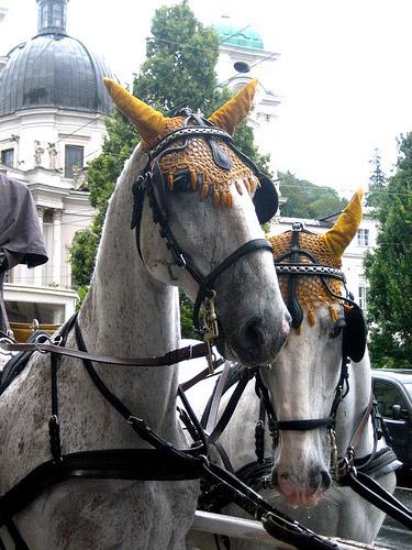 Horse in Austria