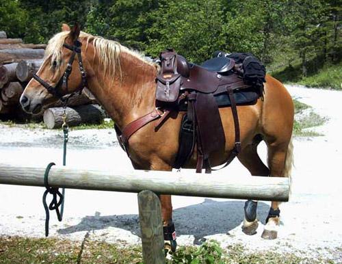 Avelignese Horse