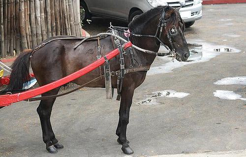 Baguio Light Horse