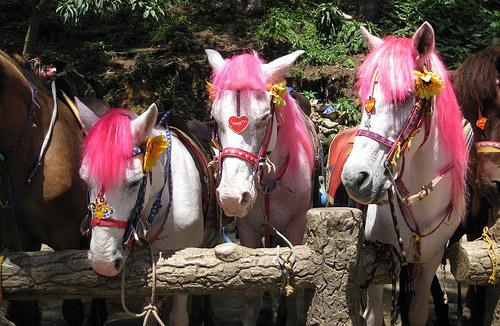 Baguio Pony