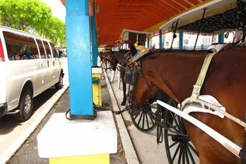Horse in The Bahamas