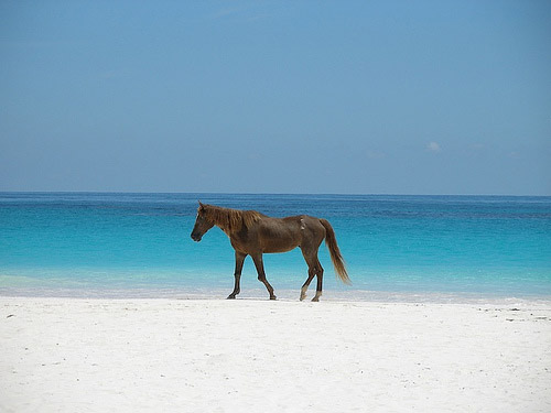 Horse Properties For Sale Long Island