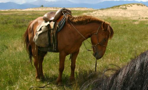 Baikal Horse