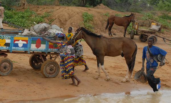 Bandiagara Horse