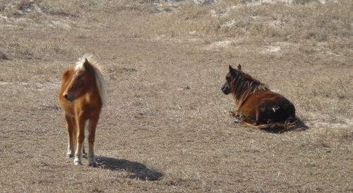 Banker Pony