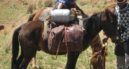 Basotho Pony