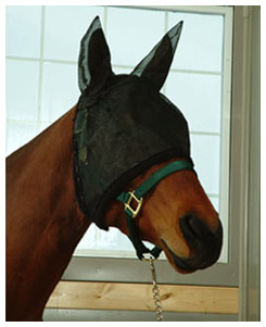 Horse wearing fly mask over eyes and ears