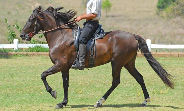Bay Horse Coat Color Modifier | The Equinest  Dark