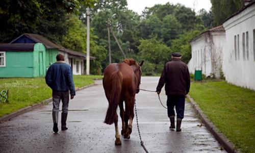 Horse in Belarus