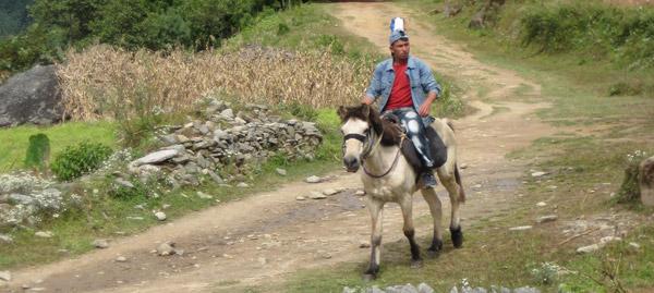 Bhotia Pony