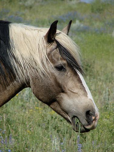Mustang Profile