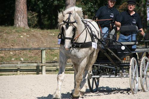Boulonnais Horse