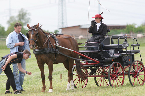 Brandenburger Horse