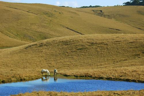 Horses grazing in the Brazilian countryside