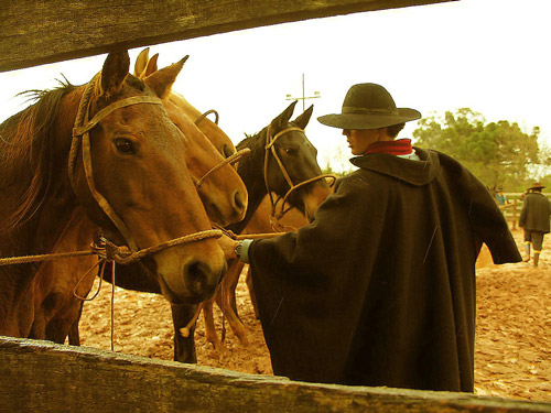 Man tending to tied horses