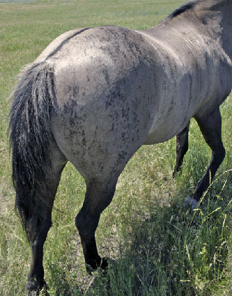 Horses Lovers: Rare Horse Colors & Markings Lace Markings Horse