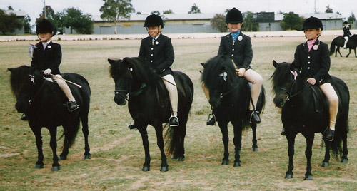 British Shetland Pony