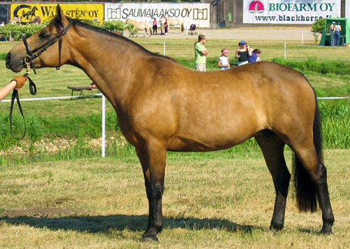 Buckskin Horse