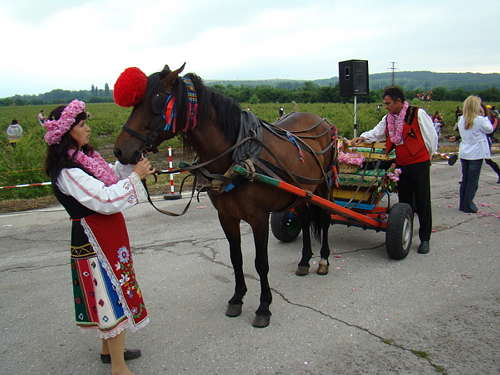Horses competing in Bulgaria