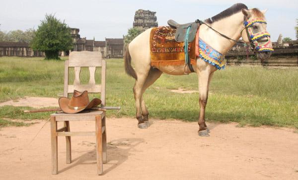Horse in Cambodia