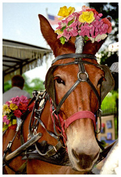 Horse with a flowered hat