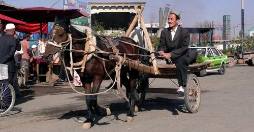 Chakouyi Horse