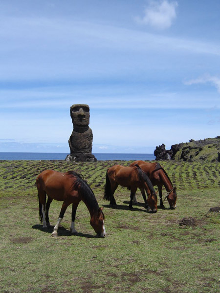 Horses grazing on Easter Island