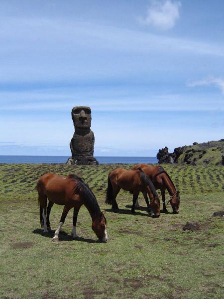 Horses grazing on Easter Island