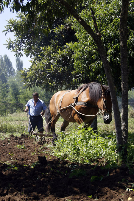 Man and horse plowing a field