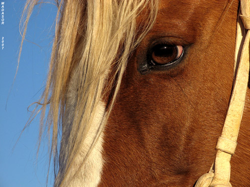 A close up of a horses eye