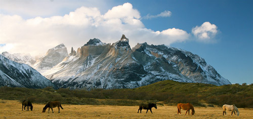 Horses at liberty in Patagonia
