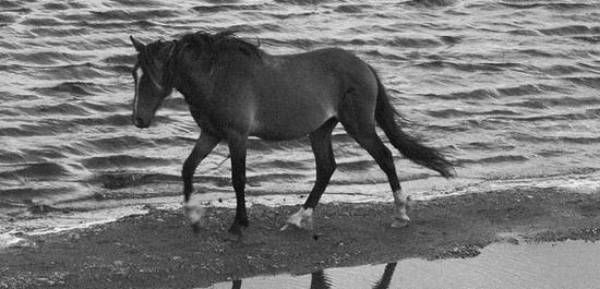 Chilote Pony