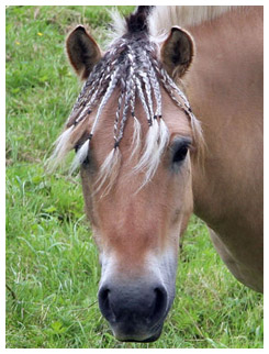 Horse with braided forelock