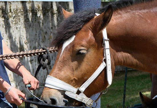 Content Horse