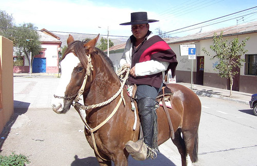 Chilean Corralero