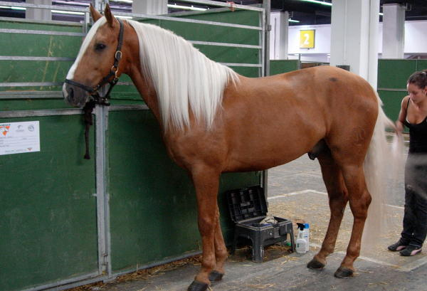 Cream Horse Coat Color Dilution Gene The Equinest
