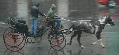 Cuban Pinto Horse
