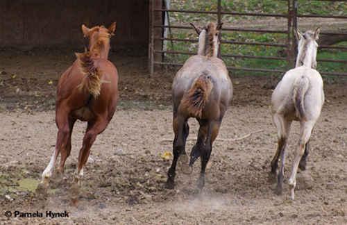 3 Running Colts