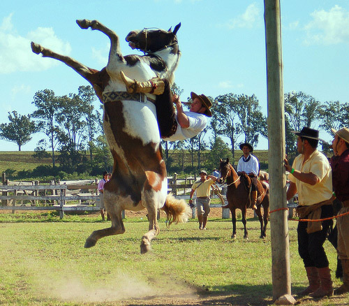 A bucking bronc in the air