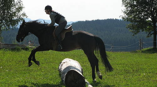 Czech Warmblood Horse