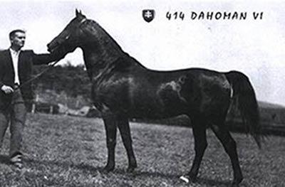 Dahoman Horse